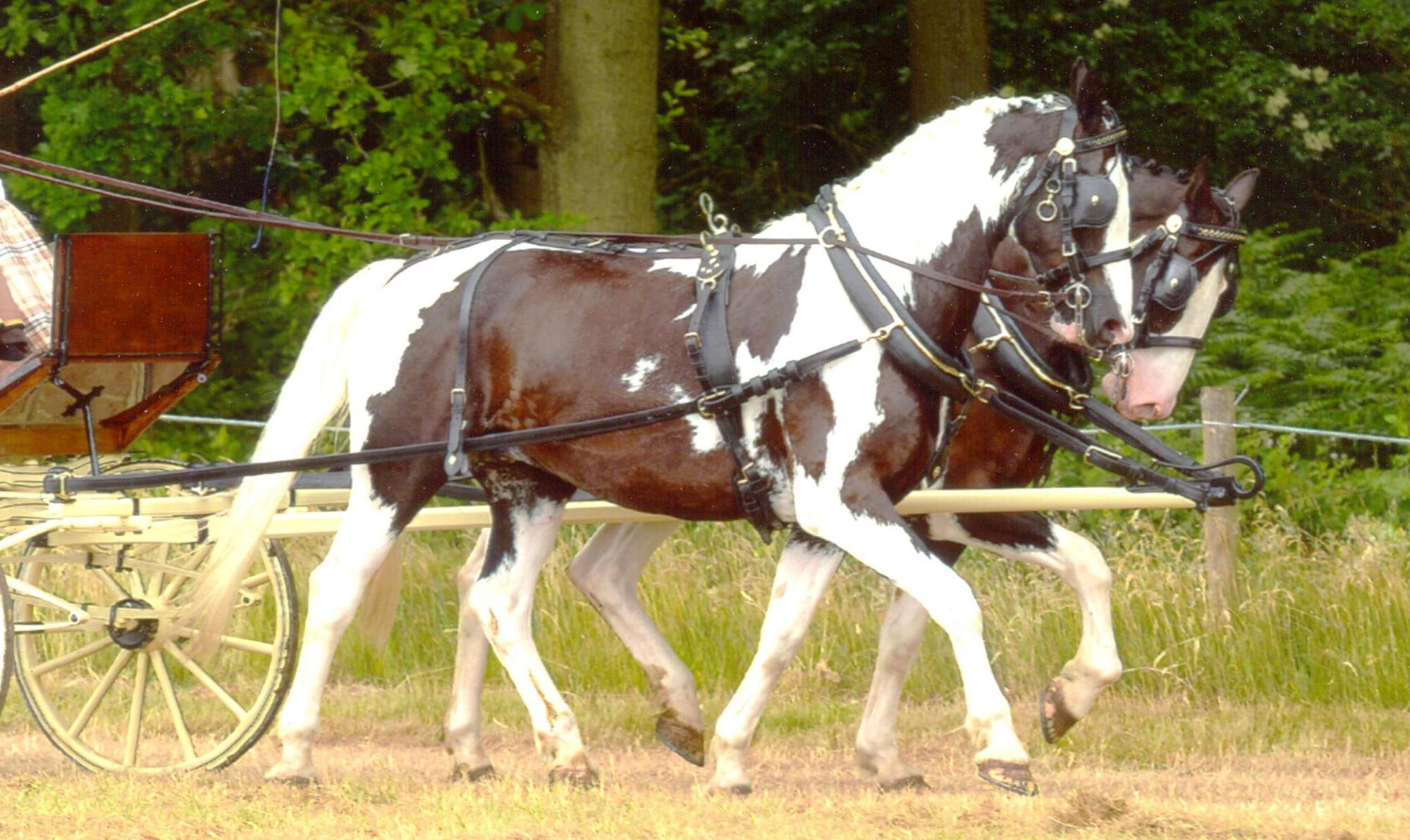 hight resolution of  show harness