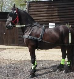 pony harnes [ 3264 x 2448 Pixel ]