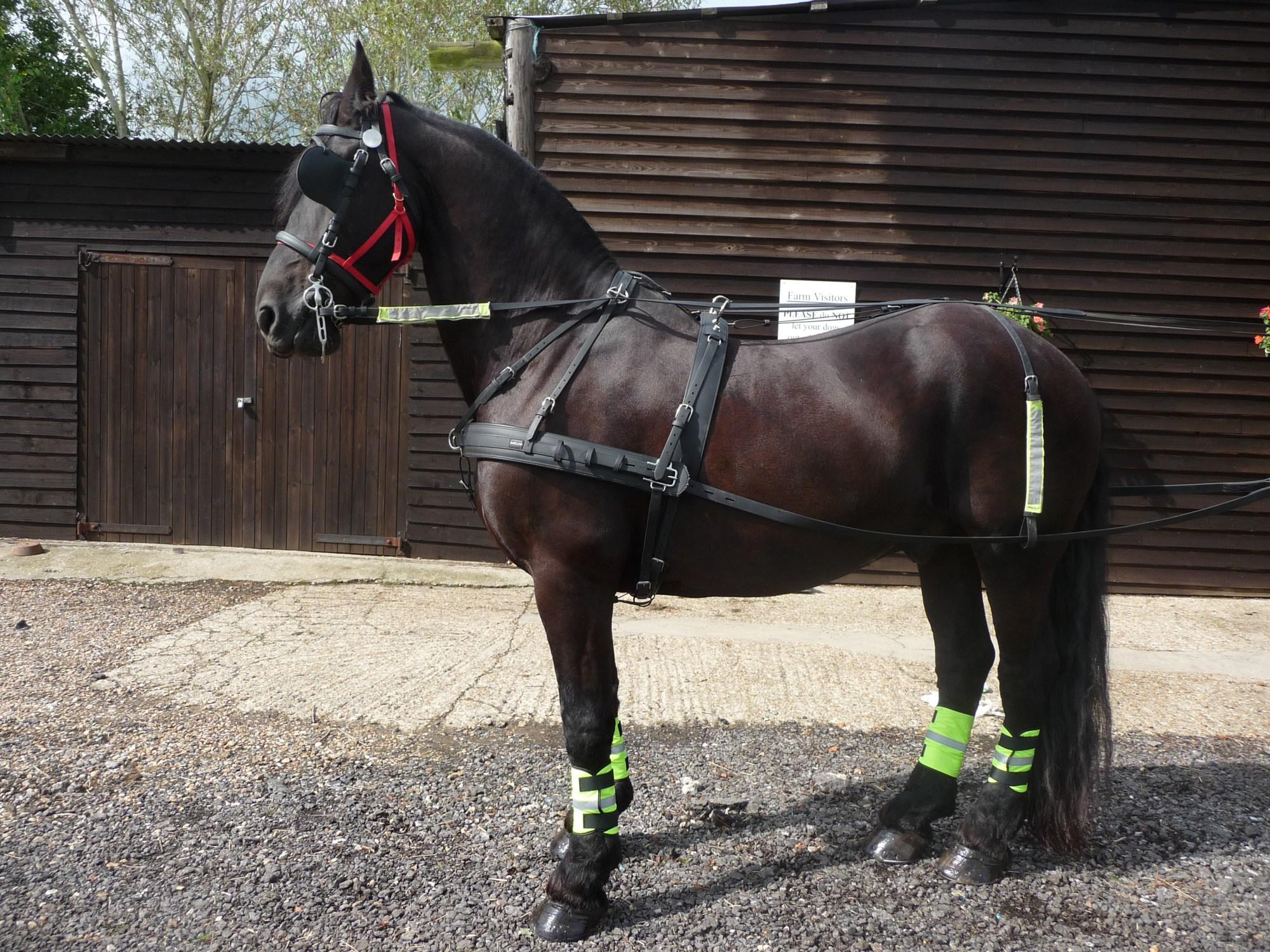 hight resolution of pony harnes