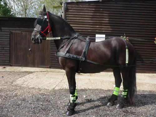 small resolution of pony harnes