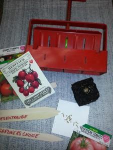 Soil blocking tomatoes