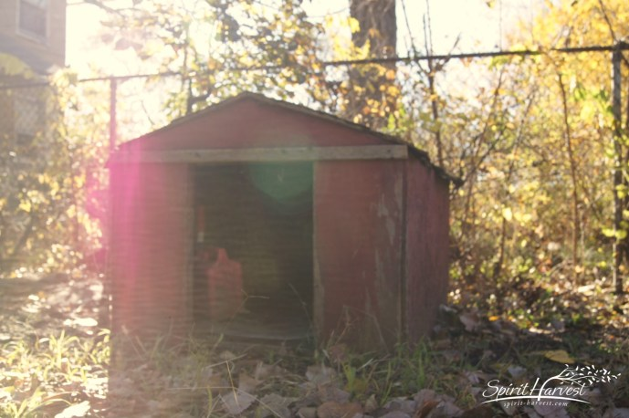Dog house. Photo: Spirit-Harvest.comGary, IN 2011