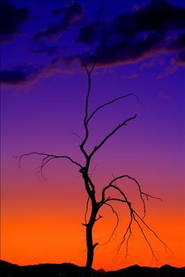 dead tree sunset 2