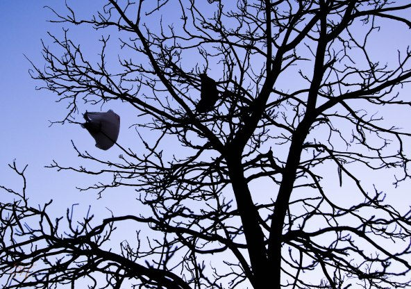 How did that bag get up in the tree?