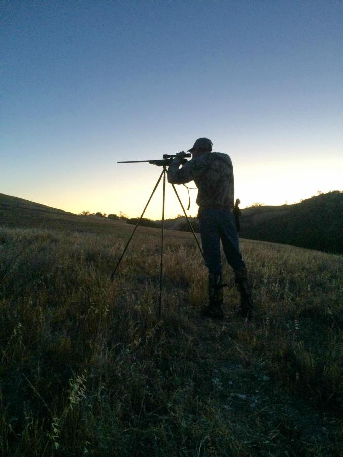 july pig hunt - aiming