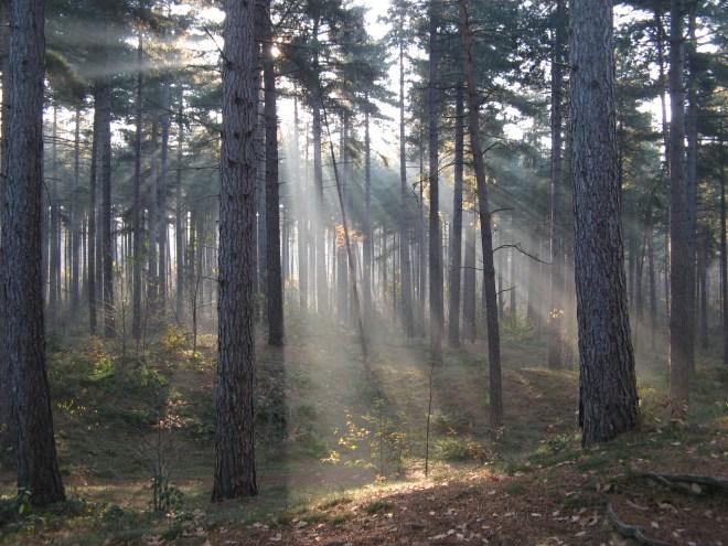 Dreary Woods