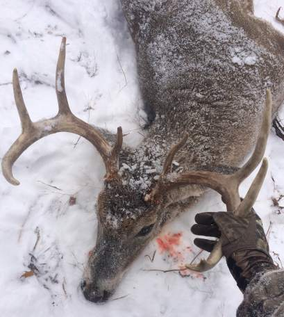 Harvested Mature Whitetail Buck
