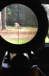 Deer in Sights