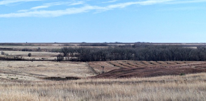 Mule Deer Hunting in Kansas