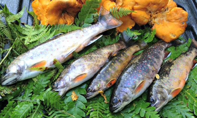 Stowe Brookies & Chanterelles-EDT