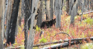 Bear in the Backcountry