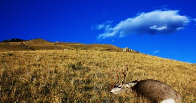 Public Land Mule Deer