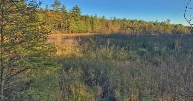 Hunting Swamp bucks