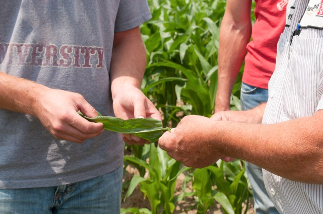 Agronomy_Looking at plant-2.jpg