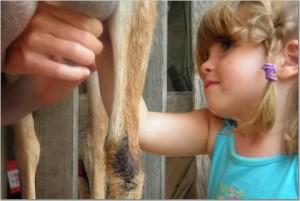 adalyn-milks-goat