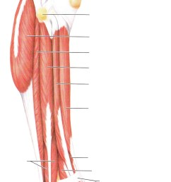 blank leg diagram wiring diagram centre blank leg diagram [ 1253 x 2396 Pixel ]