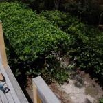 Harwood Menuisier escalier bois piscine