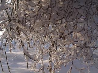 Bild: Vereiste Zweige eines Baumes auf der Rabenskuppe bei Mansfeld.