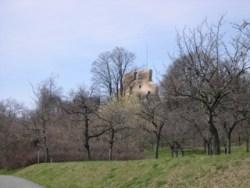 Bild: Die Ruine der Burg Stapelburg.