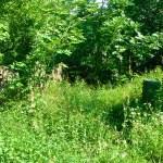 Bild: Rumpin - alte Grabsteine auf dem historischen Friedhof von Rumpin.
