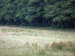 Video: Ricke mit Kitz am frühen Morgen im Frühsommer 2019 irgendwo in einem Wald im Unterharz in Deutschland in einem Full HD Video.