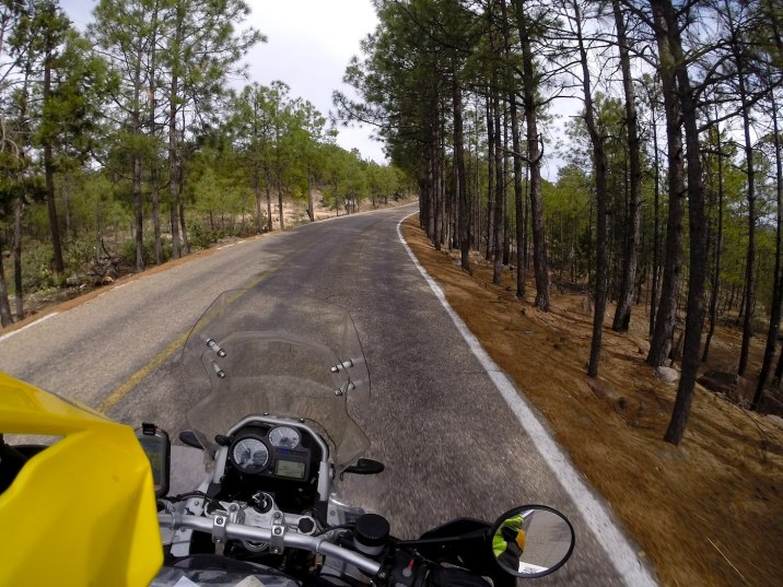 A curvy ride through a forest is always a delight.