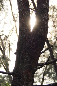 tree sunglow