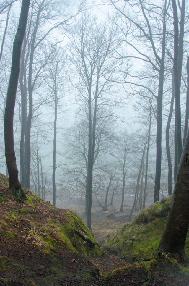 Binz Sellin Wald Gummistiefel