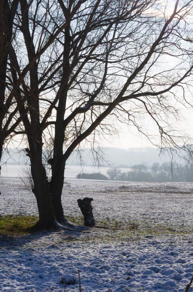 Neukalen Winter