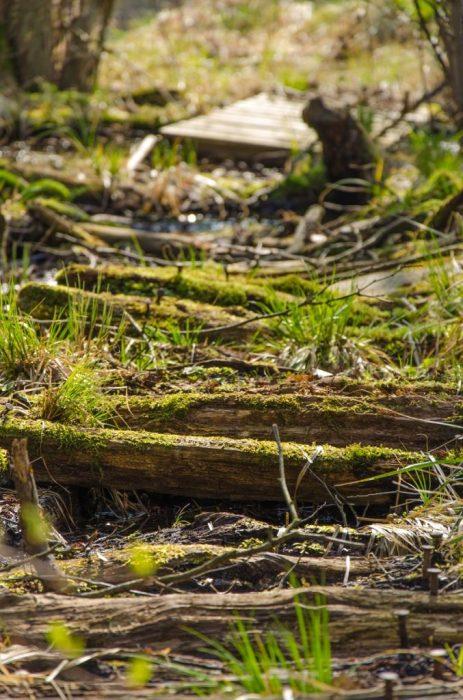 Wald Steg See 2