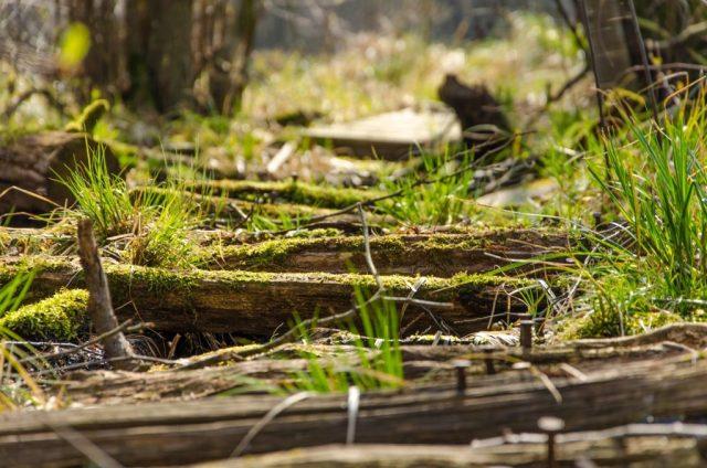 Wald Steg See 3