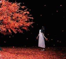 aimer_-_akane_sasu_lim_a