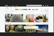فليكر تطلق ميزة البحث عن الصور المتشابهة