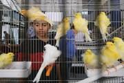 المرأة تكسر الاحتكار الذكوري لتربية طيور الزينة في الأردن