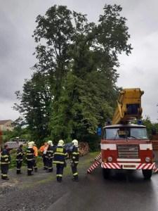Nalomený strom