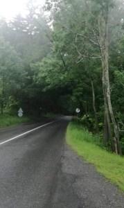 Nakloněný strom nad cestou