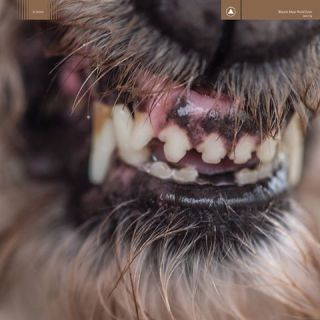 """News Added Jan 10, 2017 Blanck Mass is the solo project of Benjamin John Power. The Fuck Buttons musician has been making music under the moniker since 2010 and his second album, Dumb Flesh, is his Sacred Bones debut.Power's self-titled debut was released on Mogwai's Rock Action in 2011. This year Benjamin introduce """"World Eater"""" […]"""