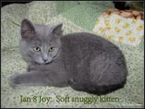 Jan 8: Snuggly kitten