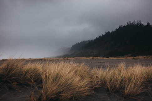fog at gold bluffs beach campground california coastline