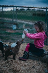 Toddler feeding dwarf goats unique family photos lifestyle photography Los Angeles