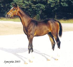 Syncytia 29423
