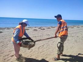 Samandağ sahilinin 12 kilometresi petrol atıklarından temizlendi