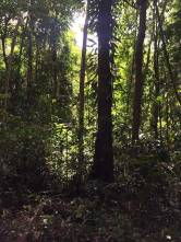 Daintree Rainforest and Mossman Gorge sun filtering