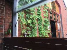 Bridge Road Brewers Beechworth vines