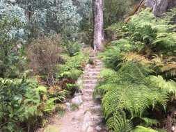 Well made steps Eurobin Falls