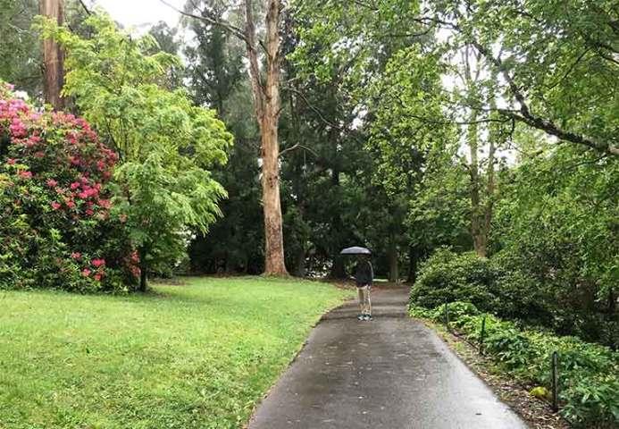 David in the Dandenong Ranges Botanic Garden