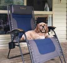 Fudge enjoying the Oztrail Sun Lounge Jumbo Chair