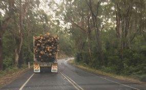 Log Trucks Tarra Valley