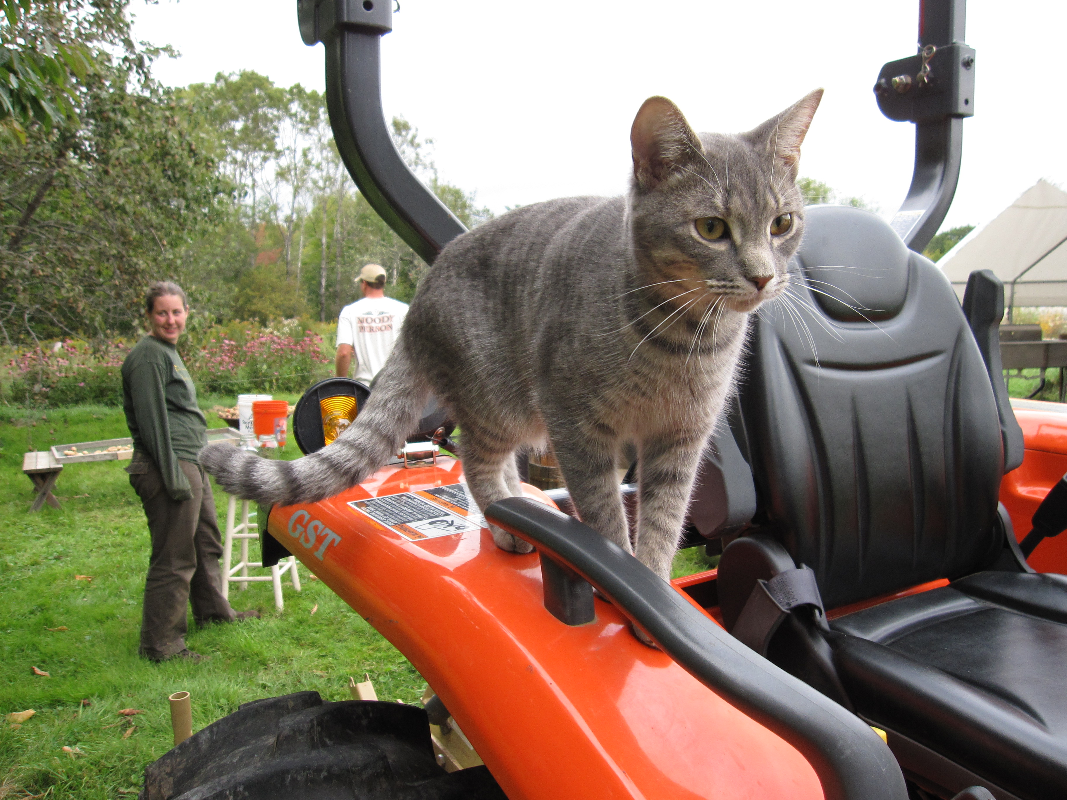 Velcro, ready for his next tractor ride.