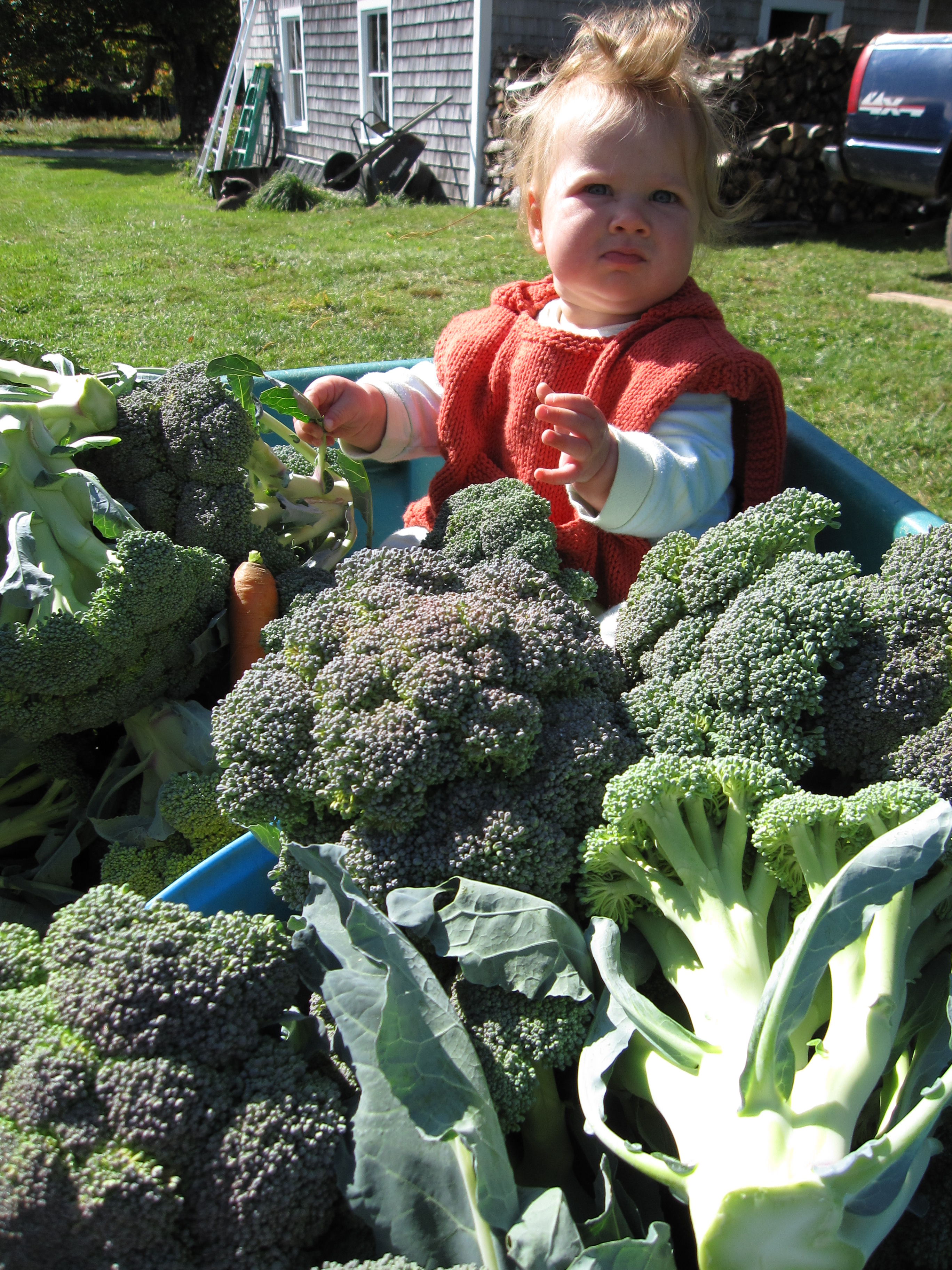 Cecilia in a wagon full of just-harvested broccoli